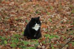 Gatto nero sul prato inglese immagine stock libera da diritti