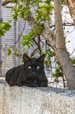 Gatto nero sulla parete Immagine Stock Libera da Diritti