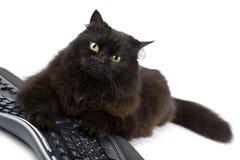 Gatto nero sveglio sopra la tastiera isolata Immagini Stock