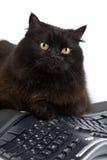 Gatto nero sveglio sopra la tastiera isolata fotografie stock