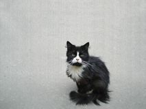 Gatto nero triste Fotografia Stock Libera da Diritti