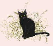 Gatto nero in un'erba appassita Fotografia Stock