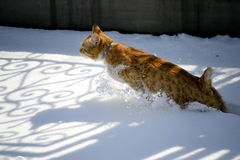 Gatto in neve Fotografie Stock