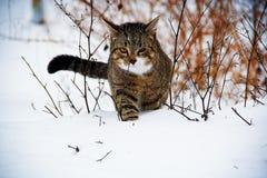 Gatto in neve Immagine Stock Libera da Diritti