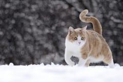 Gatto in neve immagine stock