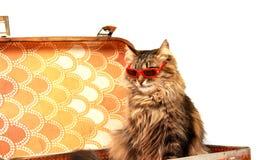 Gatto in occhiali da sole rossi Fotografia Stock Libera da Diritti