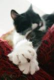 Gatto outstretched sul sofà Fotografia Stock Libera da Diritti
