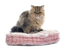 gatto persiano Immagine Stock Libera da Diritti