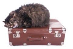 Gatto persiano che dorme sulla valigia d'annata Fotografia Stock