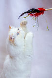 Gatto persiano un fondo leggero Immagini Stock