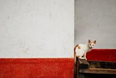 Gatto perso Fotografia Stock Libera da Diritti