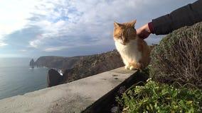 Gatto petted vicino al mare stock footage