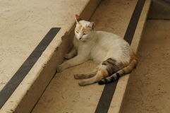 Gatto piacevole Fotografia Stock