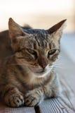 Gatto piacevole Fotografie Stock