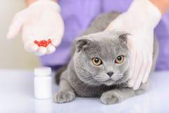 Gatto piacevole che si siede sulla tavola Fotografia Stock