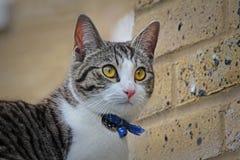 Gatto in pieno di meraviglia Fotografie Stock