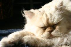 Gatto pigro Immagini Stock Libere da Diritti