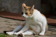 Gatto pigro in giardino Immagine Stock Libera da Diritti