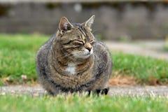 Gatto pigro nel giardino Fotografie Stock