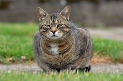 Gatto pigro nel giardino Fotografia Stock Libera da Diritti