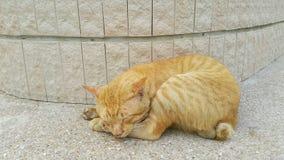 Gatto pigro in parco Fotografia Stock