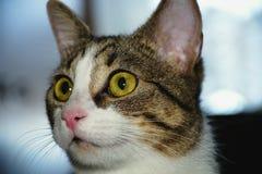 Gatto - pose differenti fotografia stock libera da diritti