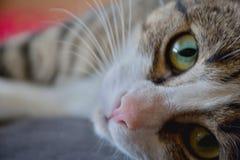 Gatto - pose differenti fotografie stock libere da diritti
