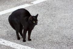Gatto posteriore Fotografia Stock