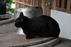 Gatto posteriore Fotografie Stock