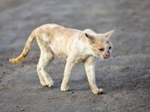 Gatto povero e malato Fotografie Stock Libere da Diritti