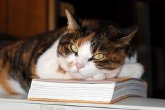 gatto premuroso Fotografie Stock Libere da Diritti