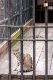 Gatto in prigione Immagine Stock