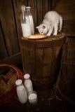 Gatto purulento con latte fotografia stock