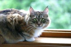 Gatto-ragazza Fotografie Stock Libere da Diritti