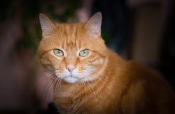 Gatto rosso adorabile Fotografia Stock Libera da Diritti