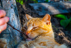 Gatto rosso allegro Immagini Stock Libere da Diritti