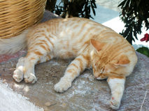 Gatto rosso che dorme su una parete di estate calda in Grecia Immagini Stock