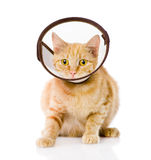 Gatto rosso che indossa un collare dell'imbuto Isolato su priorità bassa bianca Fotografie Stock
