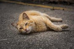 Gatto rosso che si rilassa sulla strada immagini stock