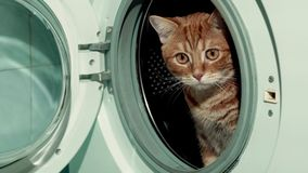 Gatto rosso che si siede in lavatrice 4K video d archivio
