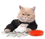 Gatto rosso che si siede sul dollaro Fotografia Stock