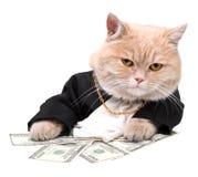 Gatto rosso che si siede sul dollaro Fotografia Stock Libera da Diritti