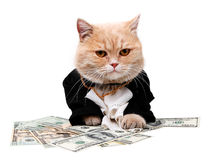Gatto rosso che si siede sul dollaro sui precedenti bianchi Fotografia Stock