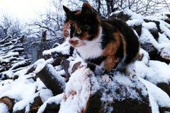 Gatto rosso che si siede sul legno di inverno coperto di neve Fotografia Stock Libera da Diritti
