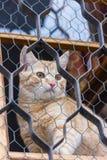 Gatto rosso che si siede sulla finestra e sugli sguardi fuori con la griglia Fotografie Stock Libere da Diritti