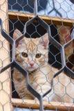 Gatto rosso che si siede sulla finestra e sugli sguardi fuori con la griglia Immagine Stock Libera da Diritti