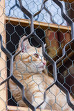 Gatto rosso che si siede sulla finestra e sugli sguardi fuori con la griglia Fotografia Stock