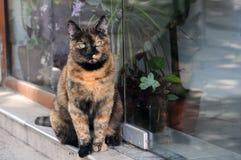 Gatto rosso con gli occhi verdi Immagini Stock