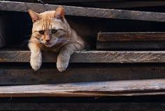 Gatto rosso con uno sguardo dispiaciuto fotografie stock