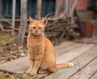 Gatto rosso con uno sguardo dispiaciuto fotografie stock libere da diritti